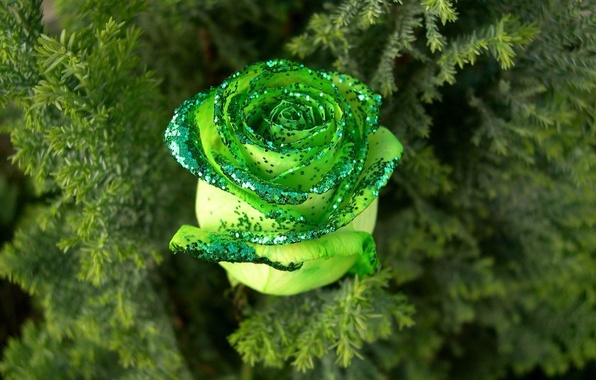 Picture rose, Greens, sequins