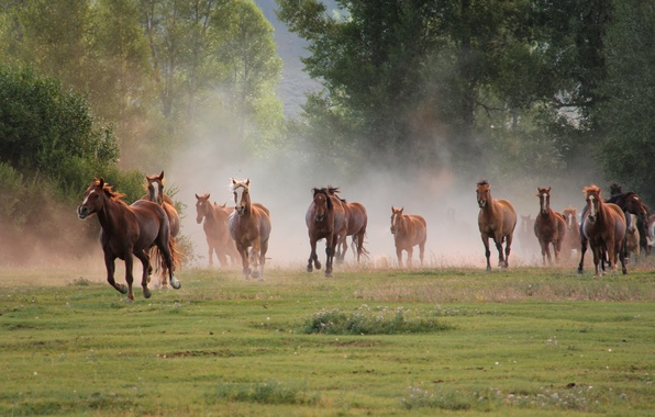 Picture nature, horses, running, the herd
