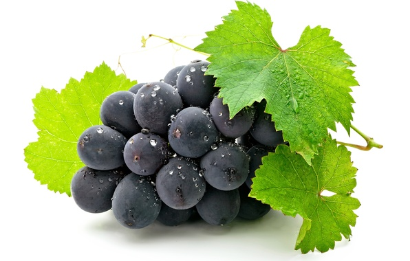 Picture leaves, berry, grapes, bunch, white background, grapes