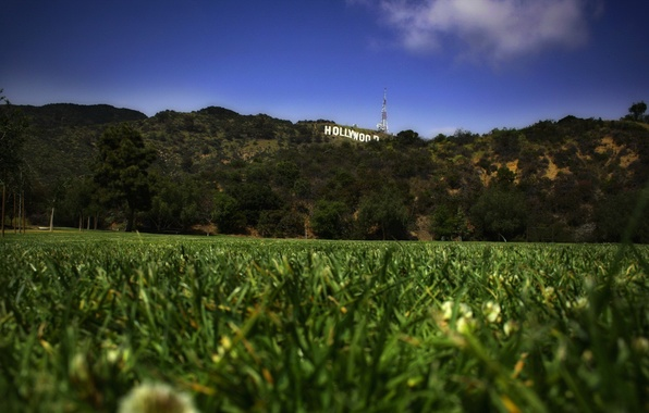 Picture lawn, Grass, Hollywood, Hollywood