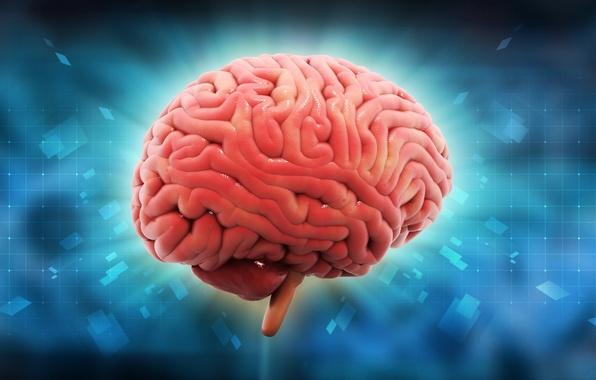 Picture brain, mind, intelligence