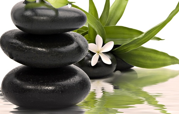 Picture flower, water, stones, Spa, spa, kbcnmz