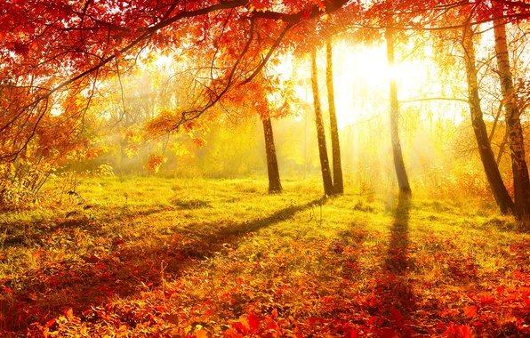 Picture autumn, forest, grass, leaves, the sun, light, trees, nature, Burgundy