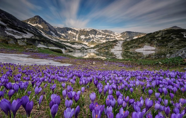 Picture the sky, flowers, mountains, nature, lake