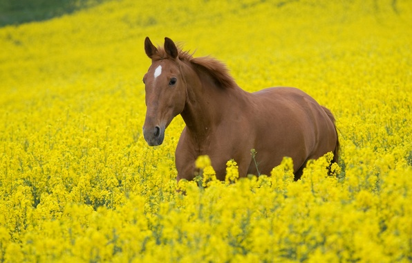 Picture field, animals, the sky, flowers, nature, horse, horse, stallion, horses, plants, horse