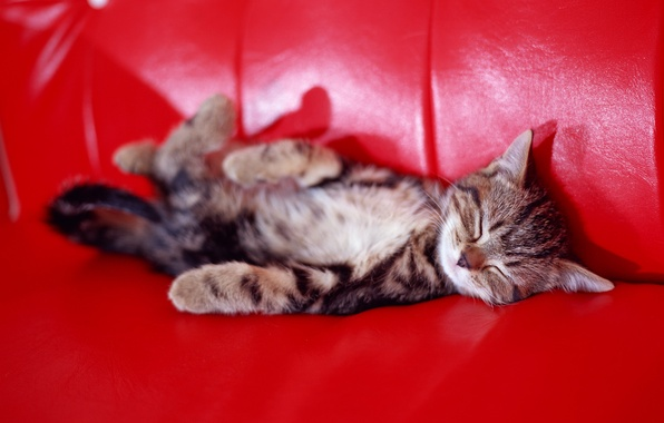 Picture kitty, sofa, sleep