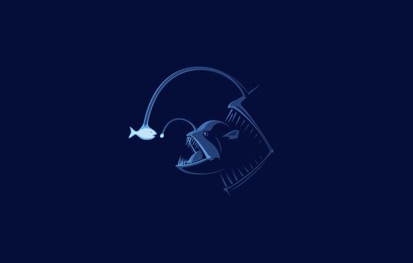 Picture fish, fish, minimalism, fish, stranger, Firefly, bait, mutant