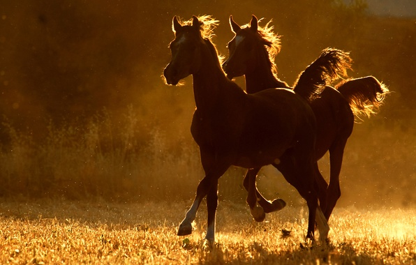 Picture two, horse, running
