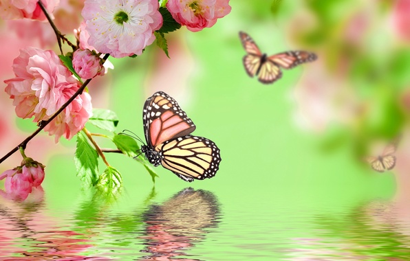 Picture water, butterfly, reflection, pink, spring, flowering, pink, water, blossom, flowers, spring, reflection, butterflies