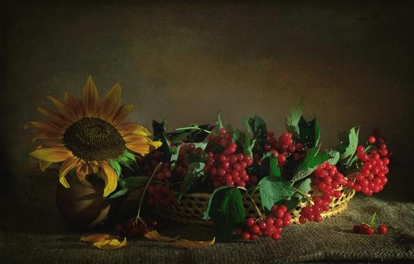 Picture berries, sunflower, texture, Kalina