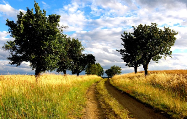 Picture road, field, trees