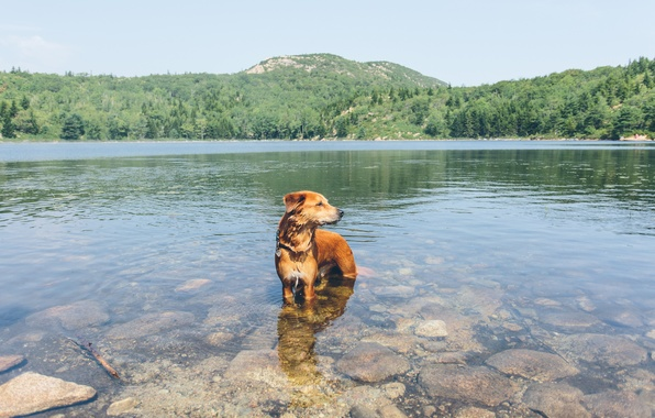 Picture mountains, lake, reflection, stones, dog, mirror, driftwood, the shore of the lake