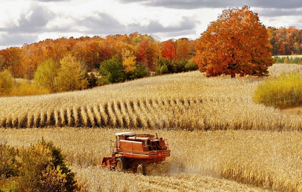 Picture wheat, field, autumn, forest, nature, harvest, harvester