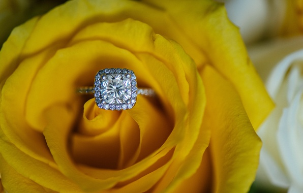 Picture rose, ring, yellow, wedding