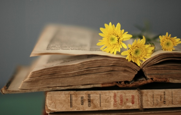 Picture flowers, yellow, style, background, Wallpaper, book, owner, page, wallpapers