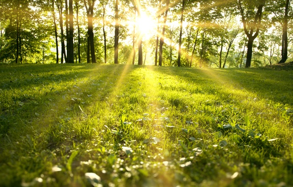 Picture forest, grass, trees, landscape, nature, grass, forest, trees, landscape, nature, the sun's rays, green field, …