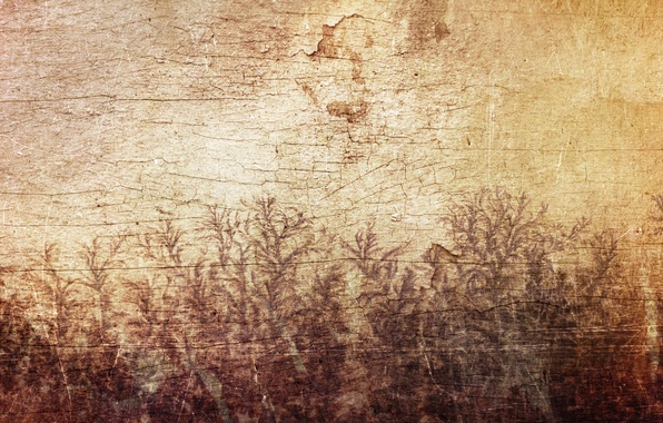 Picture leaves, cracked, wall, tree, pattern, figure, plants, Sirius-sdz, wood