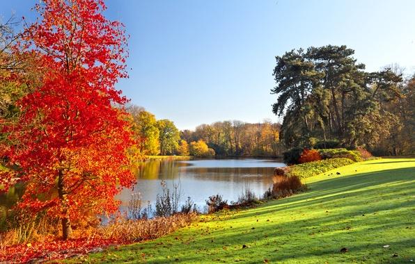 Picture autumn, landscape, lake, Park, landscape, park, autumn, lake, tree, fall season