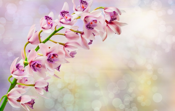 Photo wallpaper flowers, flowers, orchid, Orchid, branch