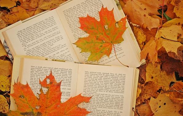 Picture autumn, leaves, photo, books, maple