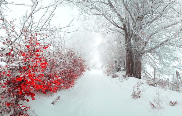 Picture winter, leaves, snow, nature, fog, tree, morning, beautiful, panorama, New year, new year, alley, Landscapes, …