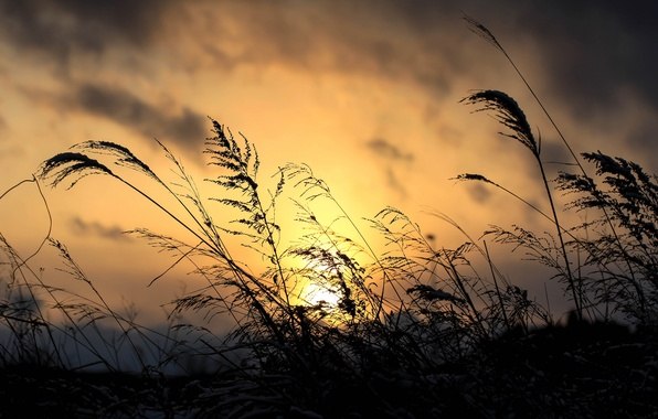 Picture the sky, grass, clouds, macro, sunset, clouds, plant