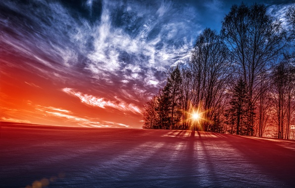 Picture the sun, snow, trees, sunset, Norway, Norway
