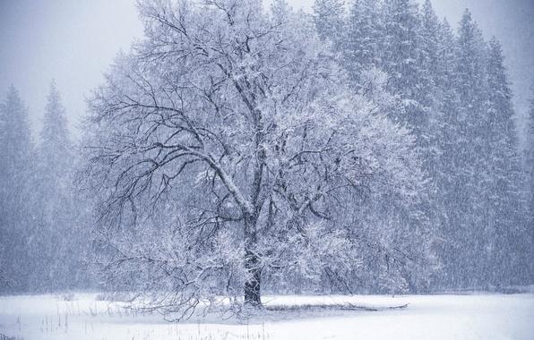 Picture winter, tree, Blizzard
