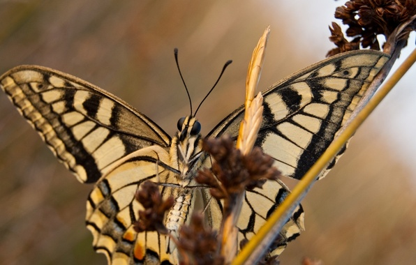 Picture stems, butterfly, wings, branch, antennae
