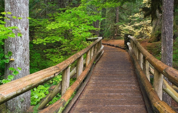Picture forest, trees, trail, Bridge