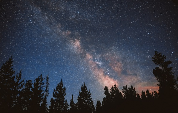 Picture forest, the sky, stars, night, the milky way