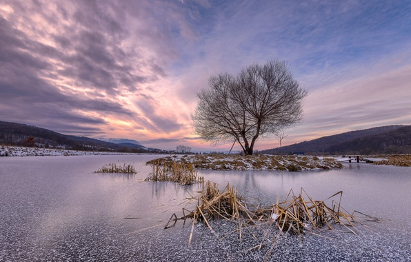 Picture winter, lake, tree