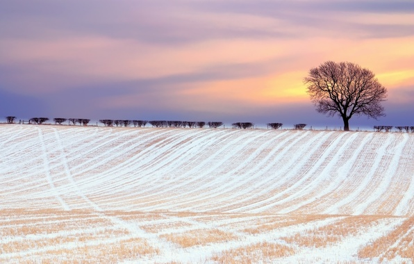 Picture winter, field, the sky, clouds, snow, tree, paint, the bushes
