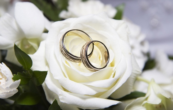 Picture rose, ring, white, wedding