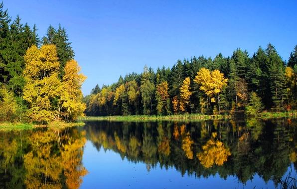 Picture autumn, forest, trees, nature, river, Landscape