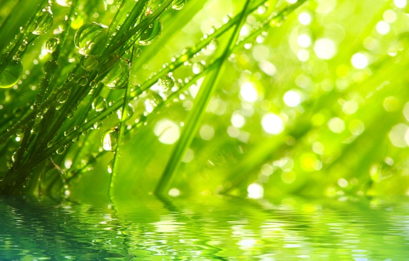 Picture grass, water, drops, macro, rays, nature, Rosa, morning, nature, water, macro, rays, morning, the grass, ...