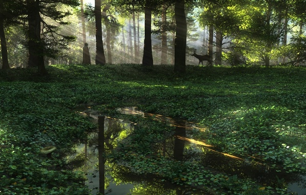 Picture forest, water, nature, people, plants, art, puddles, ROE, the sun's rays