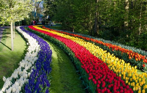 Picture flowers, Park, tulips, Netherlands, Netherlands, Keukenhof, hyacinths, Keukenhof, Lisse, Lisse