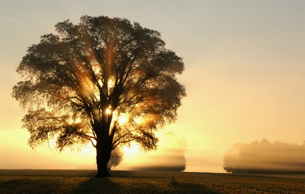 Picture field, the sun, rays, light, trees, tree, dawn, Morning