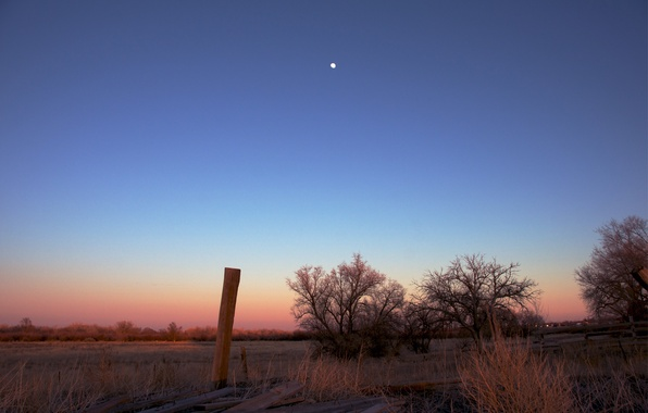 Picture field, the sky, trees, sunset, orange, pink, the moon, The evening, blue