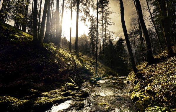 Picture forest, trees, river, stream, stones, hills, moss, river, Sunny, the sun's rays