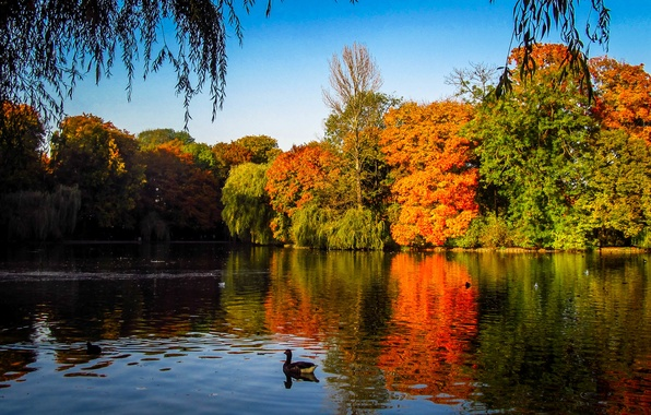Picture trees, lake, duck, Autumn, India, autumn