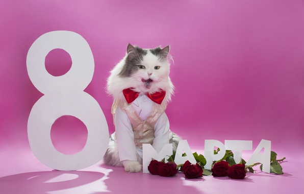 Photo wallpaper flowers, fluffy, March 8, butterfly, vest, roses, cat