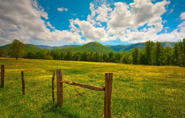 Picture greens, summer, grass, clouds, flowers, hills, posts, the fence, yellow