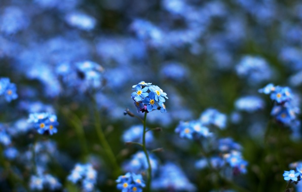 Picture color, flowers, blue, nature, green, yellow, focus, blur, bokeh
