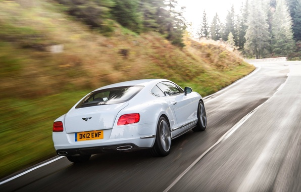 Picture Bentley, Continental, Road, White, Forest, Machine, In Motion