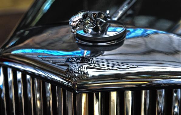 Picture Jaguar, Jaguar, emblem, chrome, label