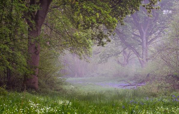 Picture forest, Prada, spring