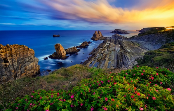 Picture sea, sunset, flowers, rocks, coast, Spain, Spain, Costa Quebrada, The Bay of Biscay, Cantabria, Cantabria, …