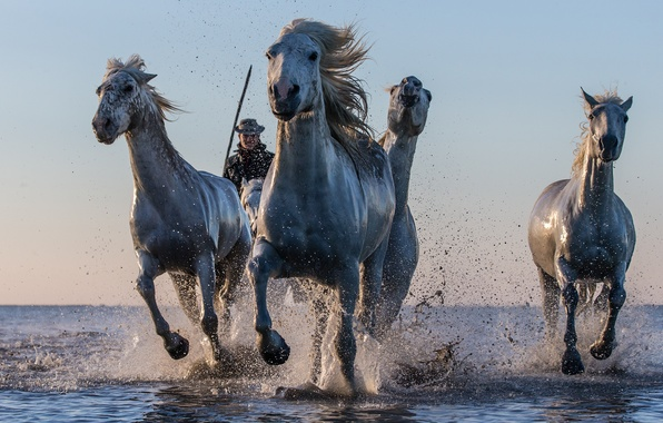 Picture water, squirt, horses, horse